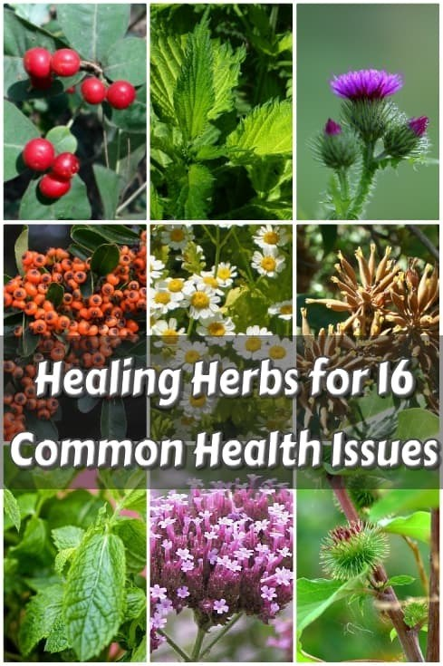 Healing Herbs for 16 Common Health Issues