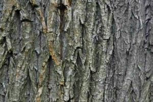 herbal medicine herbs used for healing willow bark