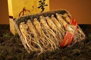 Ginseng (American or Asian, not Siberian