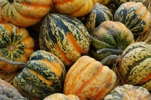 acorn-squash Are Good for the Brain
