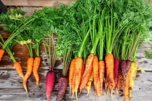 carrots the most nutrient dense foods in the world