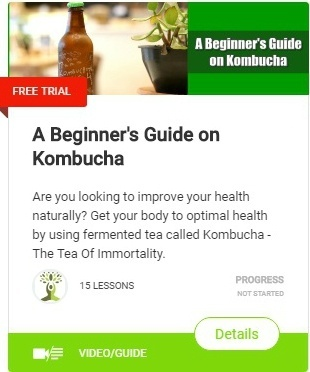 The Truth About Kombucha Tea to Control Your Appetite