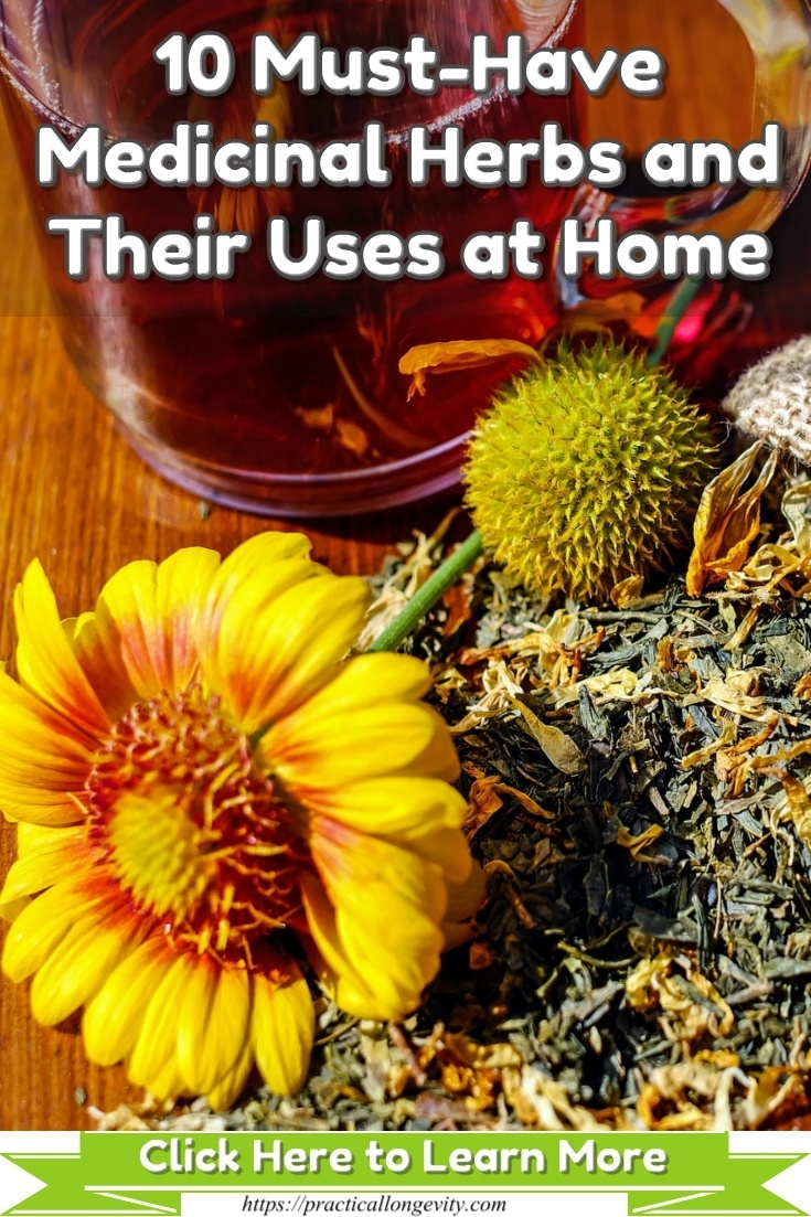 Natural Remedies – 10 Must Have Herbs and Their Uses